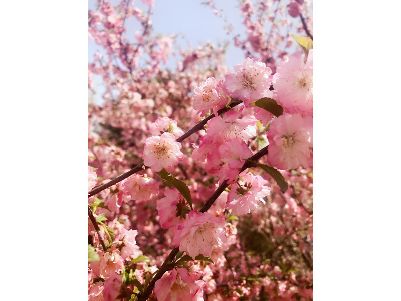 兰州银都花卉苗木种植场